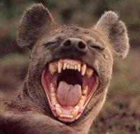 Souriez hyene 731752